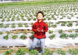 Pisga Organic